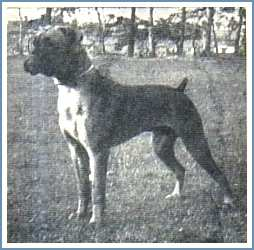 Steynmere Ringboy at 6 months